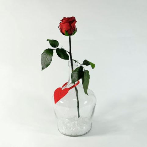 Róża stabilizowana w butelce solo