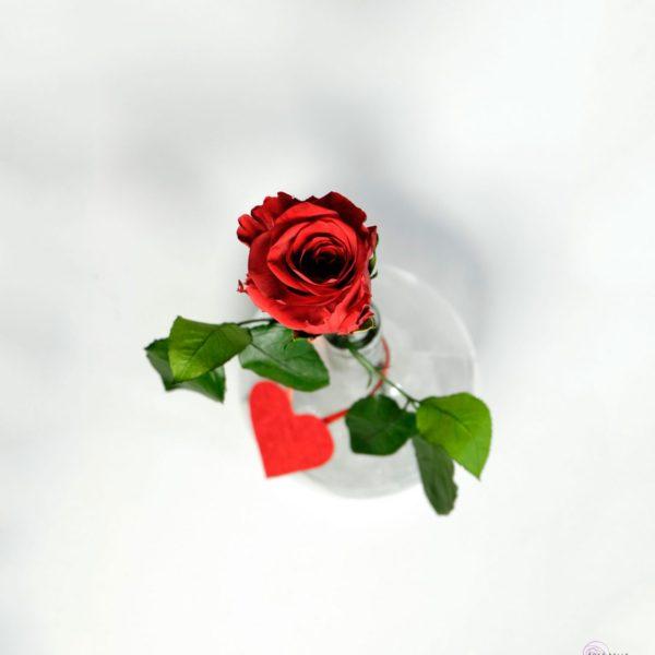 Zestaw butelka solo to idealny prezent z różą stabilizowaną