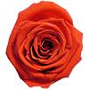Ognista pomarańcza (BOR)