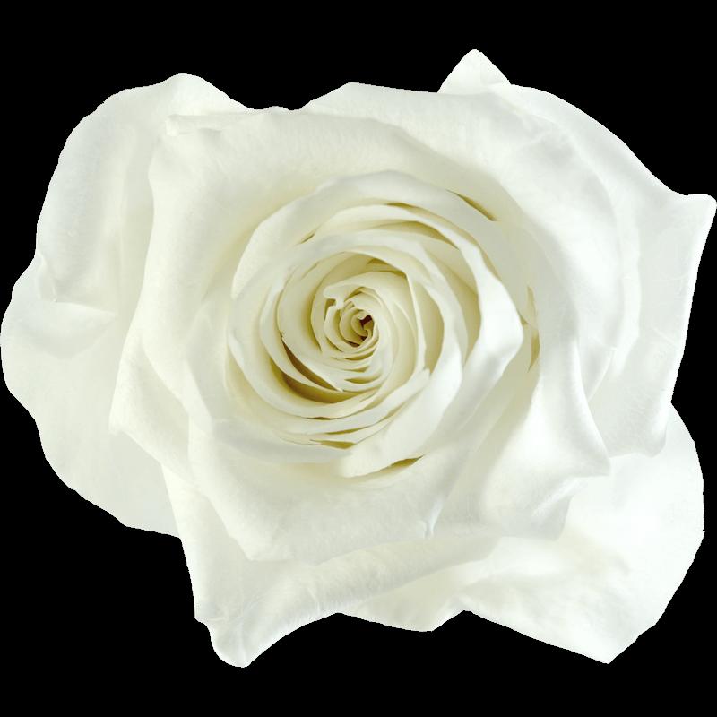 Biały (WHI)