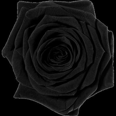 Czarny (BLA)