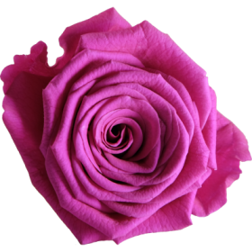 Elektrisch rosa (EPI)