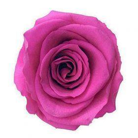 Ciemy róż (DPI)