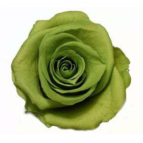 Zielony (GRE)