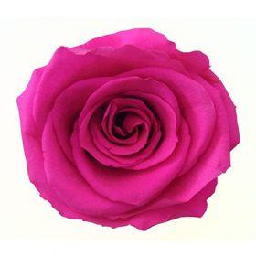 Gorący róż (P-01)