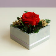 Czerwona róza w kompozycji standard