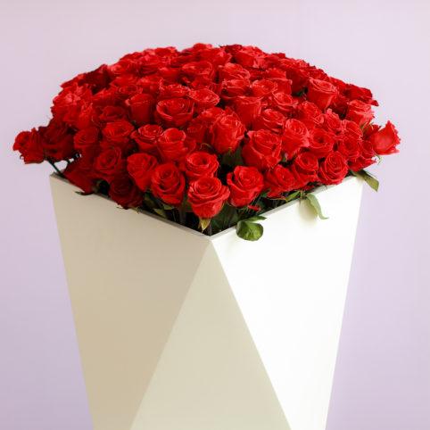 Piękne czerwone wieczne różne w osłonie Rose Belle