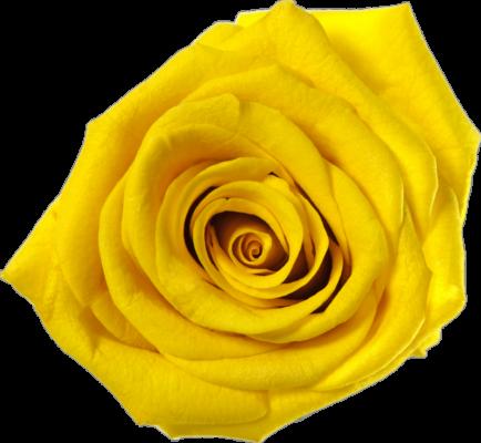 Słonecznie żółty (SYE)